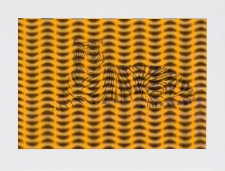 """Nancy Buchanan; Bengal Tiger; ink on paper with patterned paper overlay; 16"""" x 22½""""; 2019"""