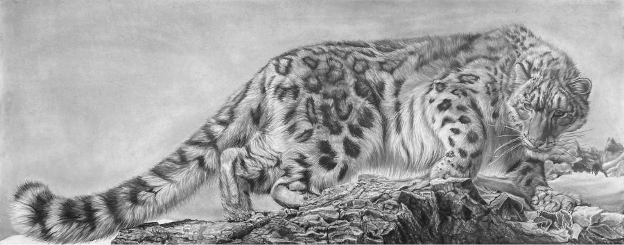 """Gregg Hamby; Mountain Ghost - Snow Leopard; pencil drawing; 63"""" x 28"""""""